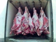 куплю говядину